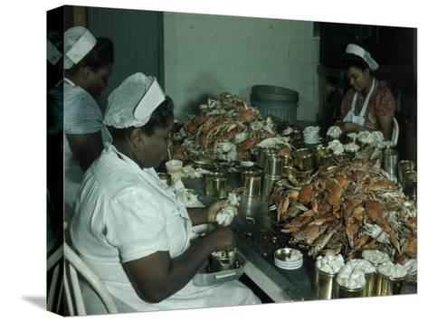 Women Pick and Pack Crab Meat into Cans-Robert Sisson-Stretched Canvas Print
