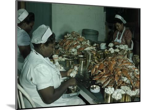 Women Pick and Pack Crab Meat into Cans-Robert Sisson-Mounted Photographic Print