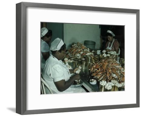 Women Pick and Pack Crab Meat into Cans-Robert Sisson-Framed Art Print
