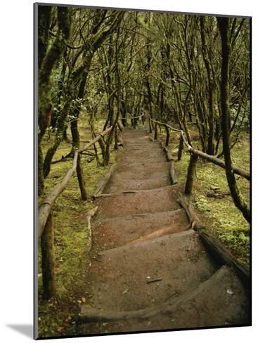 Dirt Hiking Path Through the Garajonay National Park on La Gomera-xPacifica-Mounted Photographic Print
