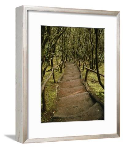 Dirt Hiking Path Through the Garajonay National Park on La Gomera-xPacifica-Framed Art Print