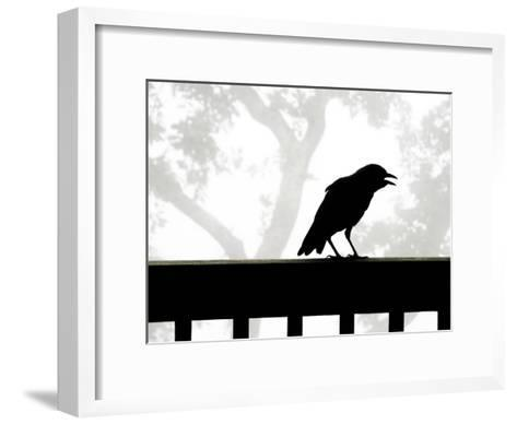 American Crow Silhouetted Against a Grey Sky with His Beak Open-White & Petteway-Framed Art Print
