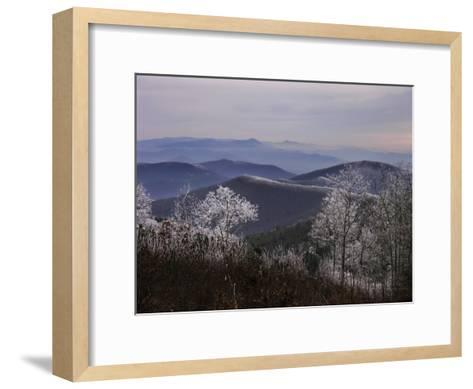 Trees Along High Elevation Mountain Ridges Frosted with Rime Ice-White & Petteway-Framed Art Print