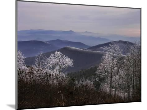 Trees Along High Elevation Mountain Ridges Frosted with Rime Ice-White & Petteway-Mounted Photographic Print
