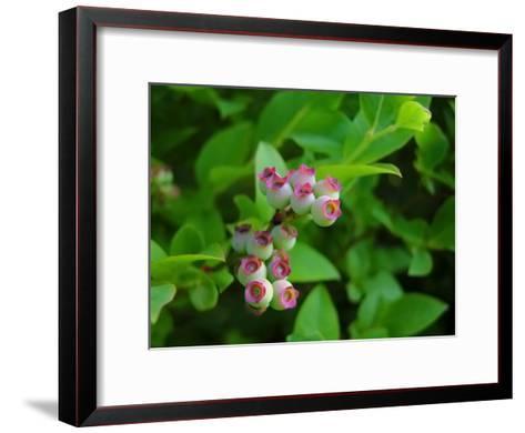 Unripe Blueberries Offer Promise of Fruit and Sustenance to Wildlife-White & Petteway-Framed Art Print