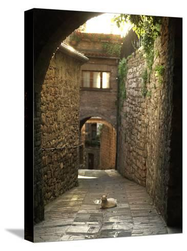 Cat Resting in the Middle of a Cobblestone Street in Gubbio, Italy-xPacifica-Stretched Canvas Print