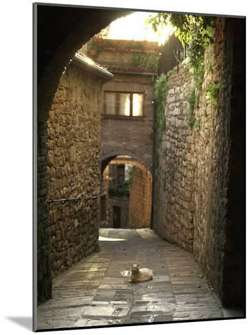 Cat Resting in the Middle of a Cobblestone Street in Gubbio, Italy-xPacifica-Mounted Photographic Print