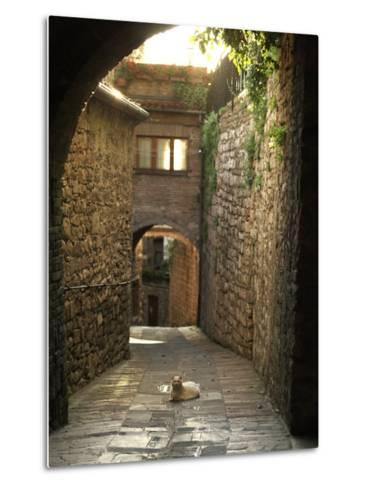 Cat Resting in the Middle of a Cobblestone Street in Gubbio, Italy-xPacifica-Metal Print