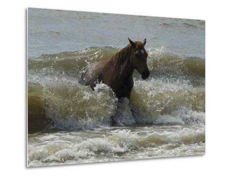 Horse Rides the Waves in the Atlantic Ocean-Stacy Gold-Metal Print