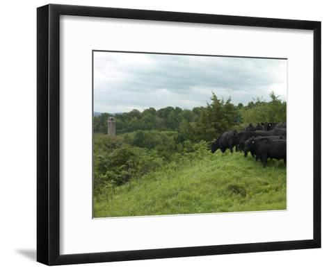 Black Angus Cattle-xPacifica-Framed Art Print