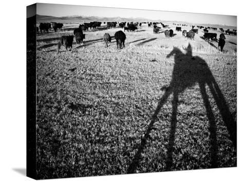 Round Up on the Reservoir Ranch in Big Piney, Wyoming-Drew Rush-Stretched Canvas Print