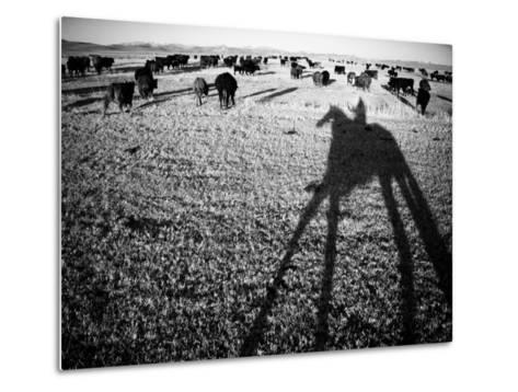 Round Up on the Reservoir Ranch in Big Piney, Wyoming-Drew Rush-Metal Print