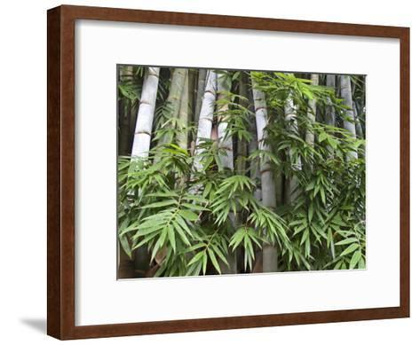 Close View of Bamboo with Leaves-Michael Melford-Framed Art Print