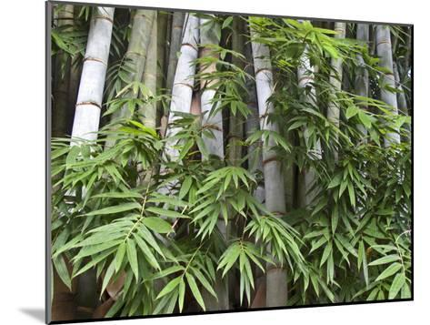 Close View of Bamboo with Leaves-Michael Melford-Mounted Photographic Print