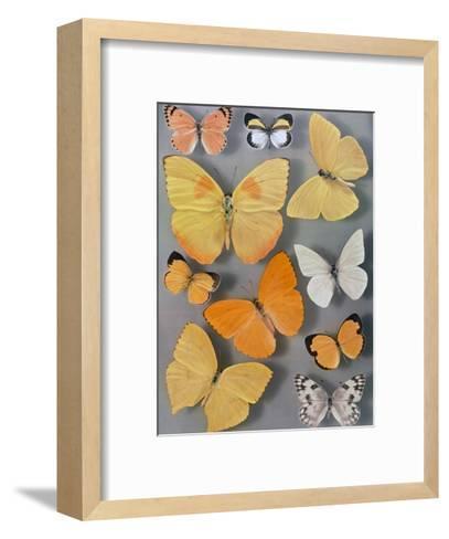 Collection of Butterflies-Willard Culver-Framed Art Print
