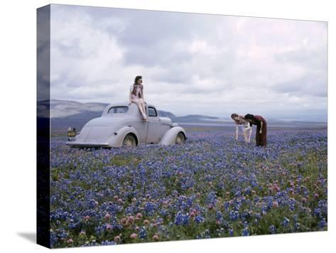 Travelers Find Wildflowers Abundant Along San Joaquin's Route 99-B^ Anthony Stewart-Stretched Canvas Print