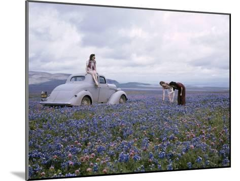 Travelers Find Wildflowers Abundant Along San Joaquin's Route 99-B^ Anthony Stewart-Mounted Photographic Print