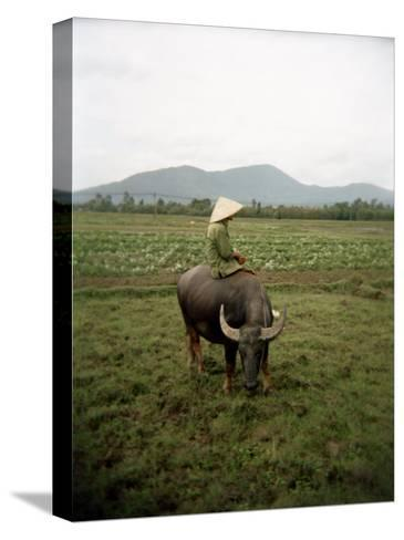 Farmer Sitting on His Water Buffalo in a Farm in Vietnam-xPacifica-Stretched Canvas Print