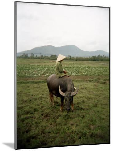 Farmer Sitting on His Water Buffalo in a Farm in Vietnam-xPacifica-Mounted Photographic Print