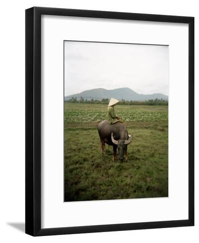 Farmer Sitting on His Water Buffalo in a Farm in Vietnam-xPacifica-Framed Art Print