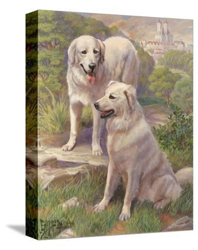 Kuvasz Dogs are Used as Watchdogs--Stretched Canvas Print