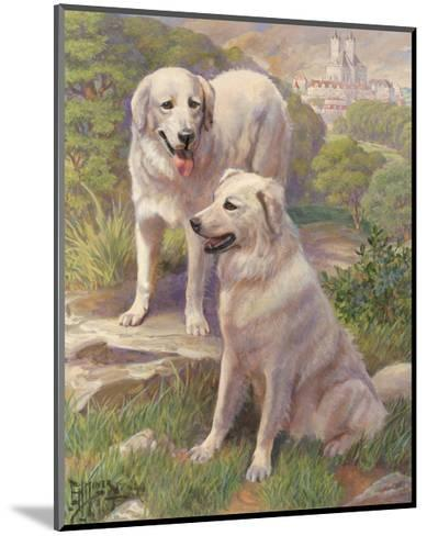 Kuvasz Dogs are Used as Watchdogs--Mounted Photographic Print