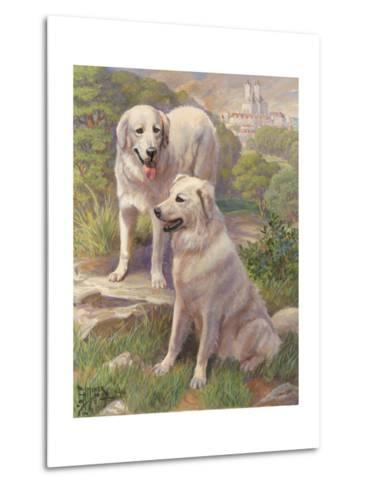 Kuvasz Dogs are Used as Watchdogs--Metal Print