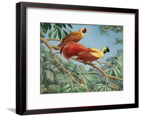 Male and Female Red Birds of Paradise Perch on a Tree Branch-Walter Weber-Framed Art Print