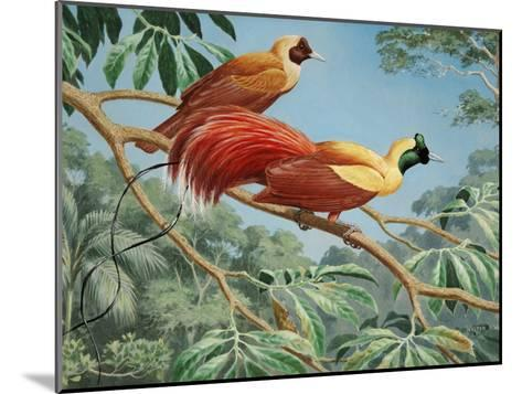 Male and Female Red Birds of Paradise Perch on a Tree Branch-Walter Weber-Mounted Photographic Print