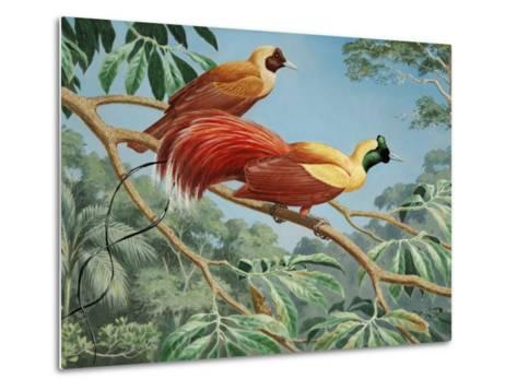 Male and Female Red Birds of Paradise Perch on a Tree Branch-Walter Weber-Metal Print