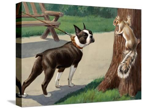 Boston Terrier Eyes a Nervous Squirrel-Walter Weber-Stretched Canvas Print