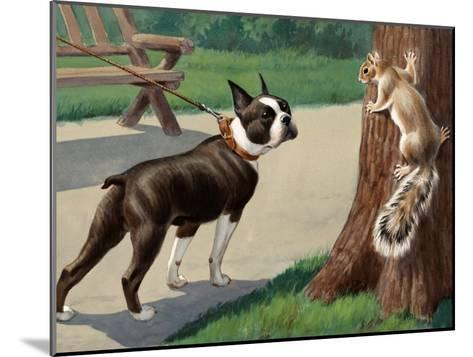 Boston Terrier Eyes a Nervous Squirrel-Walter Weber-Mounted Photographic Print