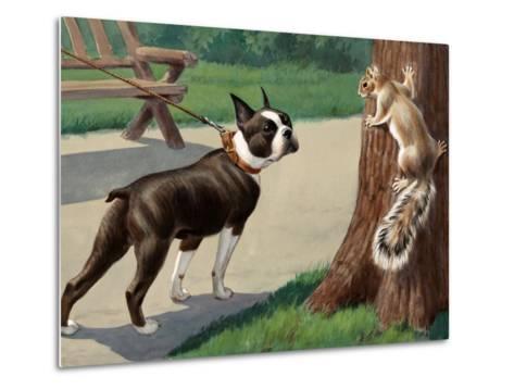 Boston Terrier Eyes a Nervous Squirrel-Walter Weber-Metal Print