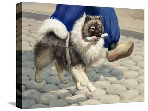 Keeshond Carries a Rolled Newspaper-Walter Weber-Stretched Canvas Print