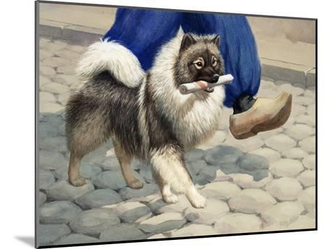 Keeshond Carries a Rolled Newspaper-Walter Weber-Mounted Photographic Print