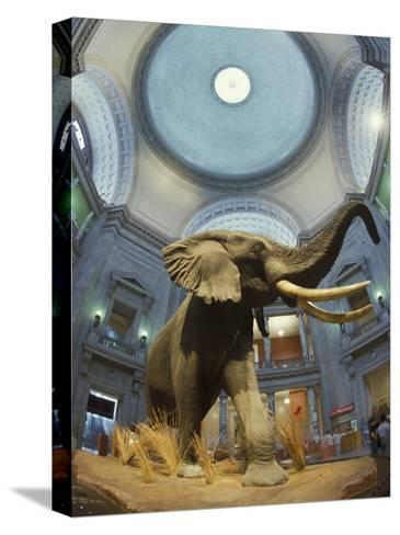 Rotunda of the National Museum of Natural History-Richard Nowitz-Stretched Canvas Print