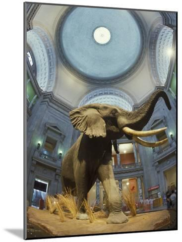 Rotunda of the National Museum of Natural History-Richard Nowitz-Mounted Photographic Print