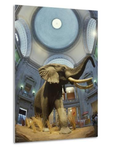 Rotunda of the National Museum of Natural History-Richard Nowitz-Metal Print
