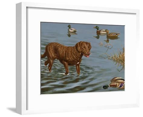 Chesapeake Bay Retriever Wades in Water to Retrieve a Dead Duck-Walter Weber-Framed Art Print