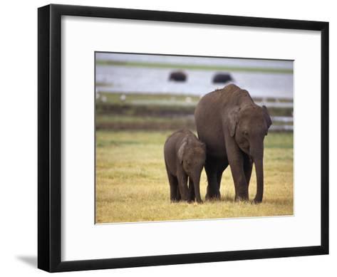 Tiny Asian Elephant Calf and it's Mother Graze on Dry Grasses-Jason Edwards-Framed Art Print