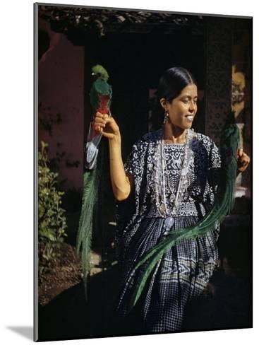 Woman Holds Mounted Quetzals, National Bird of Guatemala-Luis Marden-Mounted Photographic Print