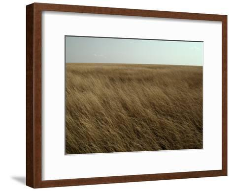 Dry Golden Sea of Grass Waves in the Wind on a Vast Plain-Jason Edwards-Framed Art Print