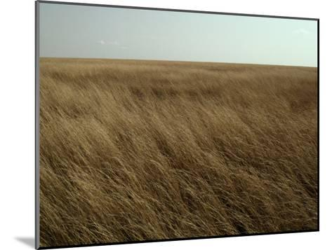 Dry Golden Sea of Grass Waves in the Wind on a Vast Plain-Jason Edwards-Mounted Photographic Print