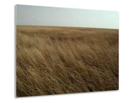 Dry Golden Sea of Grass Waves in the Wind on a Vast Plain-Jason Edwards-Metal Print