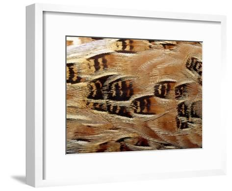 Feathers of Taxidermy Preserved Buff Breasted Button Quail-Jason Edwards-Framed Art Print