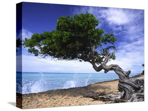 Waves Splash onto a Beach with a Gnarly Tree-Michael Melford-Stretched Canvas Print