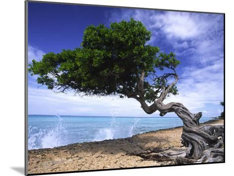 Waves Splash onto a Beach with a Gnarly Tree-Michael Melford-Mounted Photographic Print