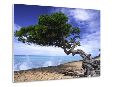 Waves Splash onto a Beach with a Gnarly Tree-Michael Melford-Metal Print