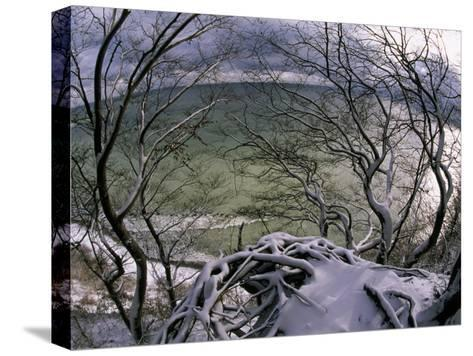 View of the Water Through Snow-Draped Beech Tree Branches and Roots-Norbert Rosing-Stretched Canvas Print