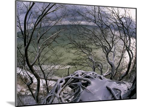 View of the Water Through Snow-Draped Beech Tree Branches and Roots-Norbert Rosing-Mounted Photographic Print